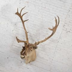 Vintage caribou shoulder taxidermy mount 1969 - 1843707